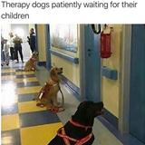 awesome therapy dogs