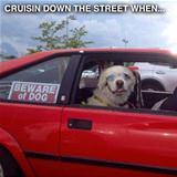 cruisin down the street