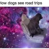 How Dogs See Roadtrips