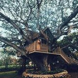 really awesome tree house