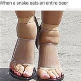 when a snake eats a deer