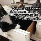 about your socks