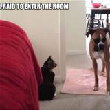 afraid to enter a room