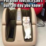 cant purr all day you know