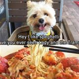 i like this spaghetti
