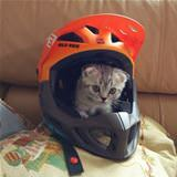 in the helmet