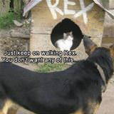 just keep walking rex