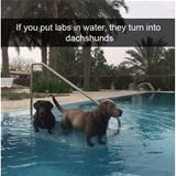 labs in water
