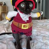 pirate cat