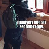 runaway dog is ready
