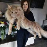that is a big fluffy cat