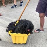 the mop dog