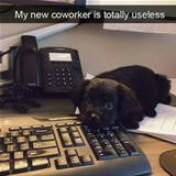 totally useless co worker