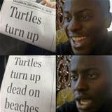 turtles turn up