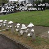 what doggy heaven looks like