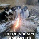 a spy among us