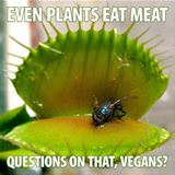 even plants eat meat