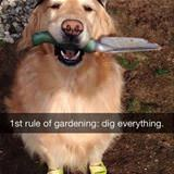 first rule of gardening