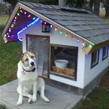 i has a christmas dog house
