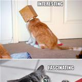 if cats were scientists