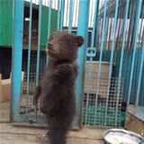 just a fun baby bear