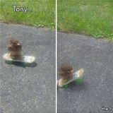 tony the hawk