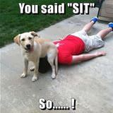 you said sit