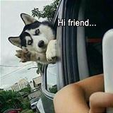 hi friend