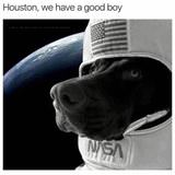 houston we have a good boy