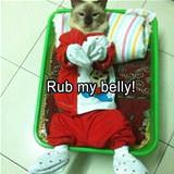 rub my belly