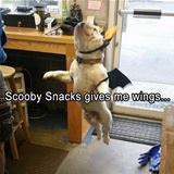 scooby snacks give me wings