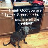 someone broke in and ate all the cookies