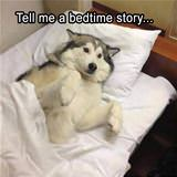 tell me a bedtime story.