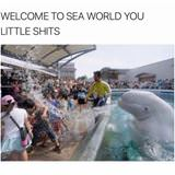 welcome to sea world
