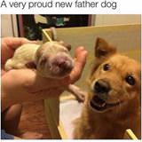 a very proud new father dog