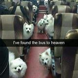 found the bus to heaven