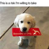 risk i am willing to take