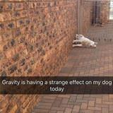 gravity and my dog