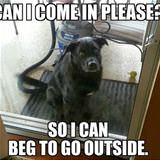 can i come in again please
