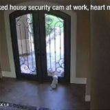 checked the security cam