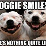 doggie smiles