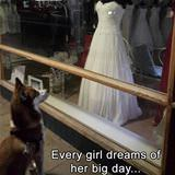 every girl dreams.