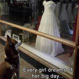 every girl dreams