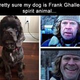 my dog is frank