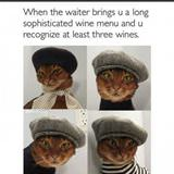 such a hipster cat