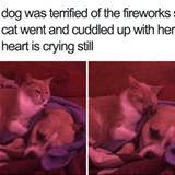 terrified of fireworks