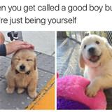 called a good boy
