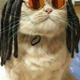 cool rasta cat
