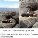Cuddling Kitties