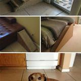 dog stairs for tiny legs